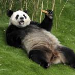Avatar de panda94