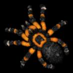 Avatar de Kavelinox