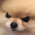 L'avatar di Ktioru