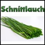 Avatar von Schnitt_Lauch