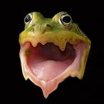 FrogFluid's Avatar