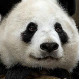 R6tracker Panda Monium Rainbow Six Siege Player Stats