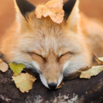 Fox_Forest's Avatar