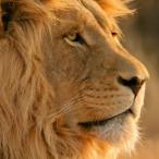 Avatar von Lionchild