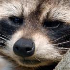 L'avatar di BS_Spartan