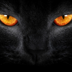 Avatar de Le.Chat.Noir