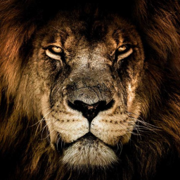 Sweepy.Lions
