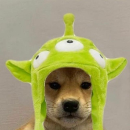 send.doggies