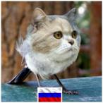 Cotelogic_RUS's Avatar