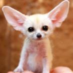 Small.Fox's Avatar