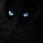 Avatar de carretoide95
