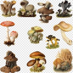 FungiMaster69