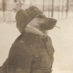 Krashdog