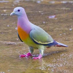 Tropic_Pigeon