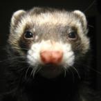 L'avatar di Weser.K1