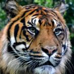 Avatar de Tigre68