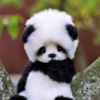Avatar de Paff_Le_Panda