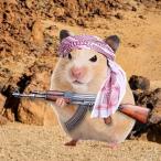 L'avatar di ZNZGU