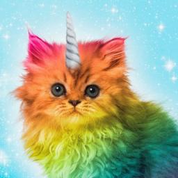 RainbowKitten1