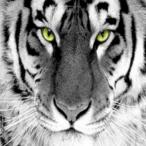 L'avatar di Ghost78_ITA