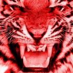 Avatar de RedTiger9