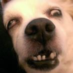 Avatar de doggy_Alesss