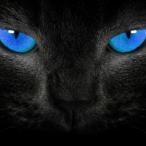 Avatar von ibimssanta_1337