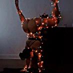 Avatar de KalelLePlusBo