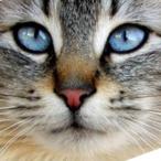 L'avatar di SleterGame