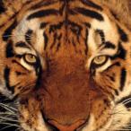 Tigered78 avatar