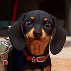 Franky_1984's Avatar