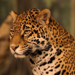 Avatar de Jaguarpaintball