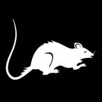 rat_in_car's Avatar